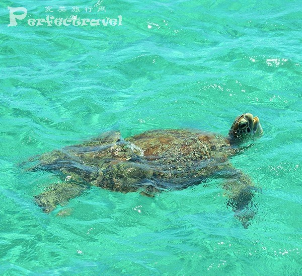 amanpulo-sea-turtle-600x548.jpg
